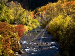UTAH Autumn River
