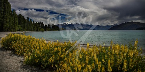 NEW ZEALAND Lake Wanaka