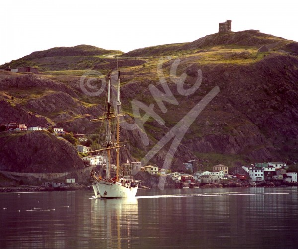 St. John's, the Battery & Signal Hill
