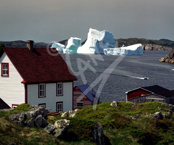 Herring Neck icebergs